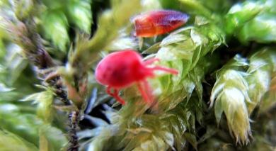 bug on moss